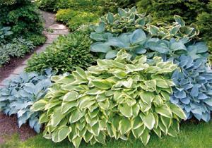 Un giardino sempre pi verde consigli verdi for Piante da bordura perenni